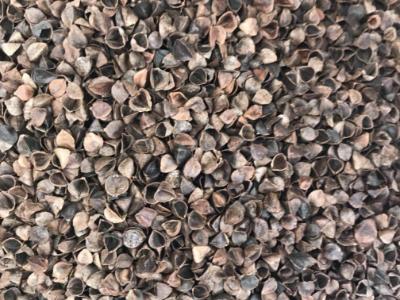 进口荞麦壳